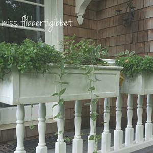 How To: Planting Windowboxes Without Going Broke