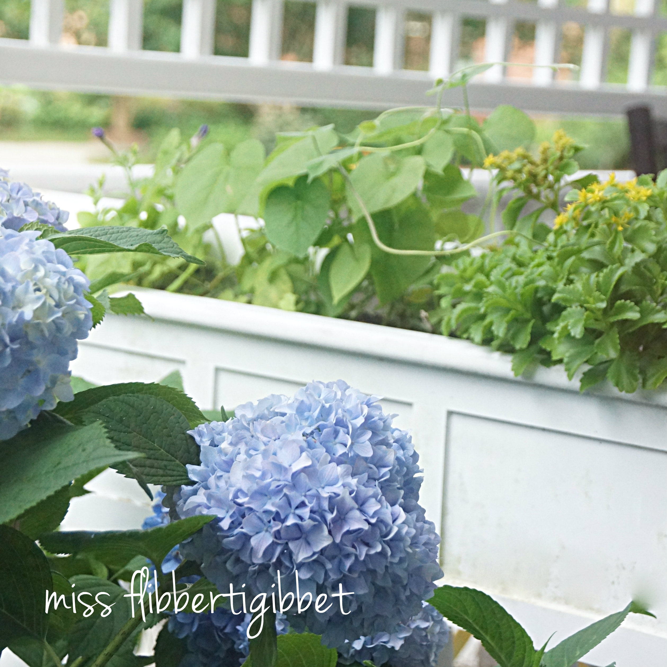 How To Planting Windowboxes Without Going Broke Miss Flibbertigibbet