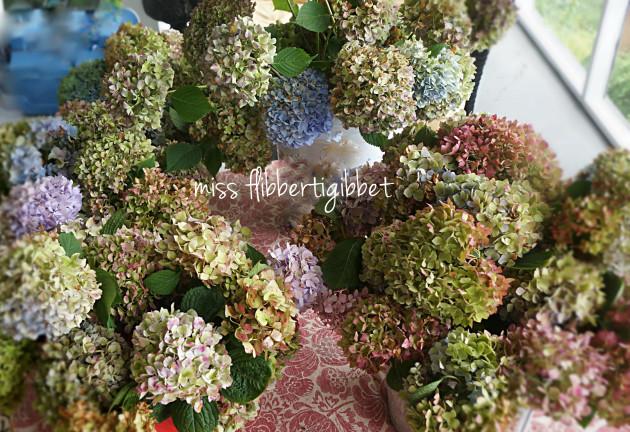 drying hydrangeas 4