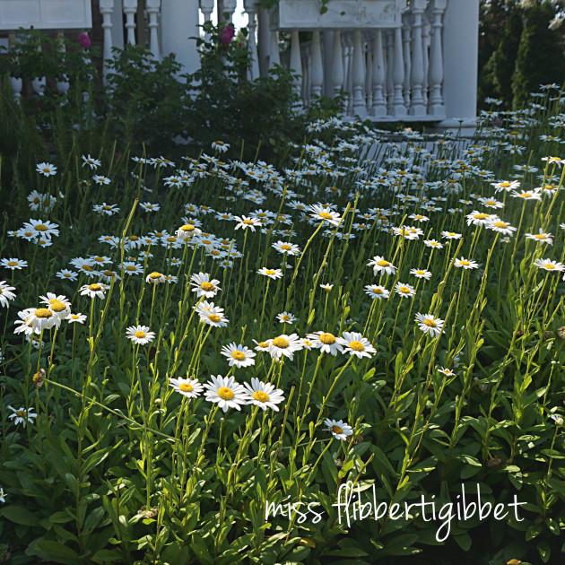 summer garden 16