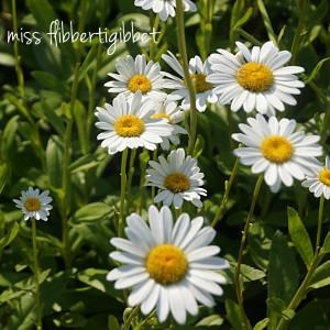 Mid-Summer Gardening
