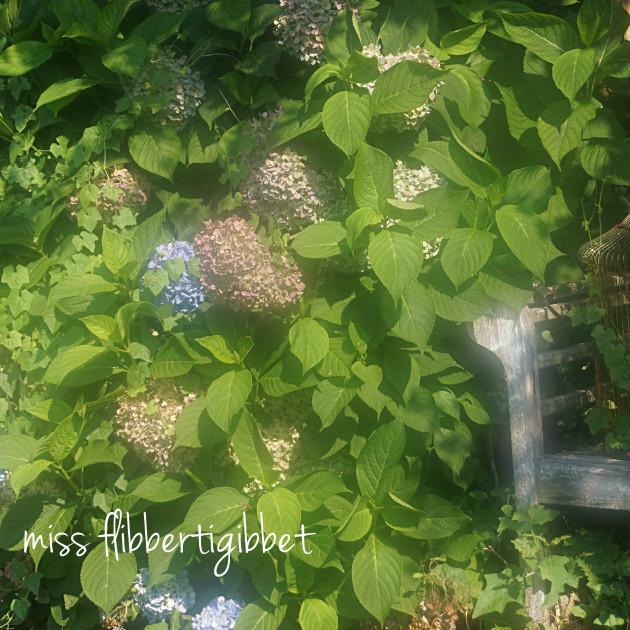 summer garden 3