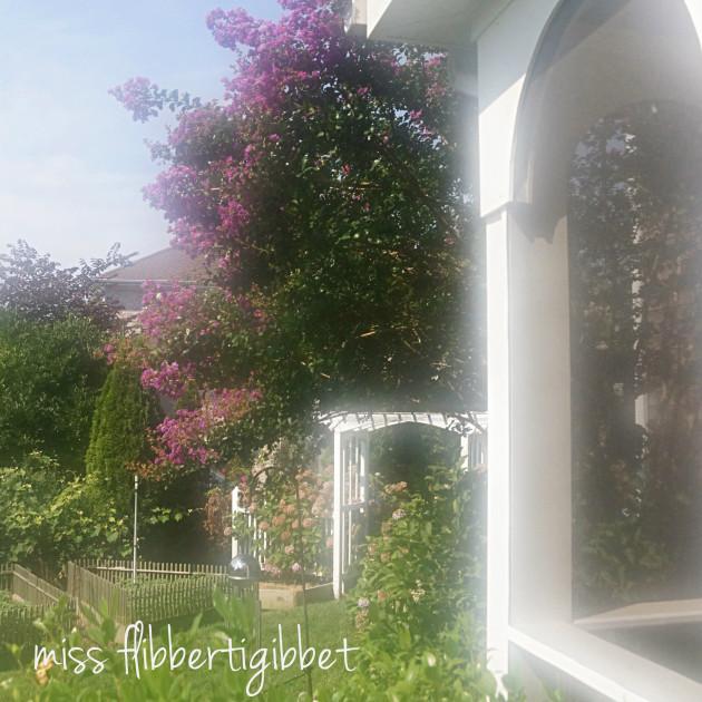 summer garden 4