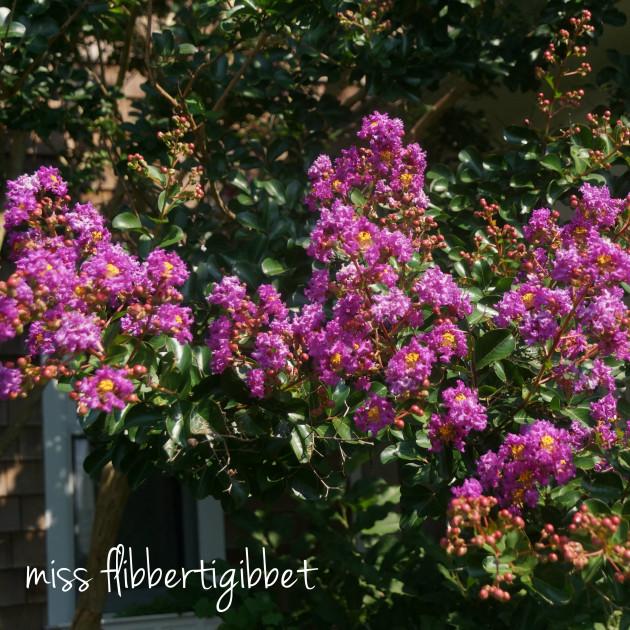 summer garden 6