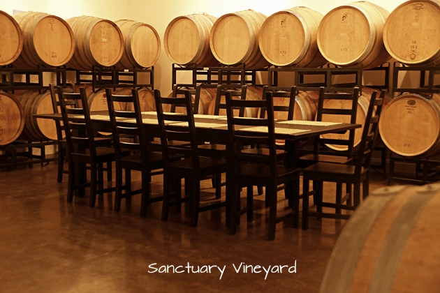 sanctuary-vineyard-2