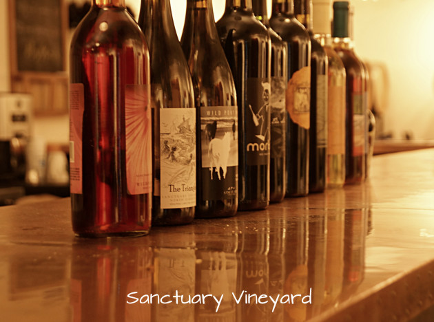 sanctuary-vineyard-4