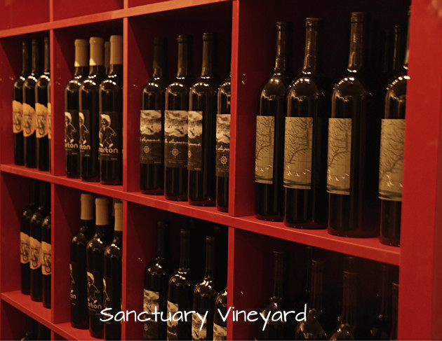 sanctuary-vineyard-6